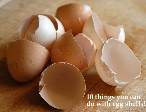 Eggshells can help your dog get better if it has problems like diarrhea.
