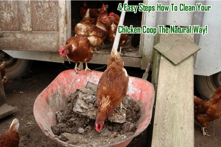 Clealning your chicken coop