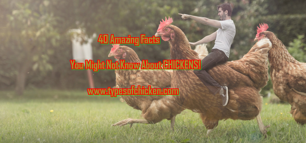 40 Amazing Facts You Might Not Know About CHICKENS! — Types of Chicken