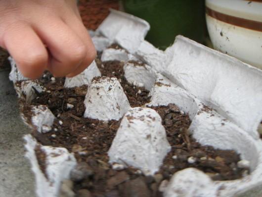 egg carton for seed startlings