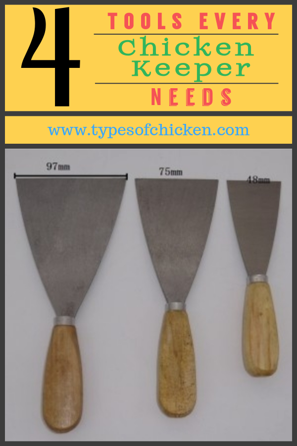 paint scraper is a must-have for every chicken keeper