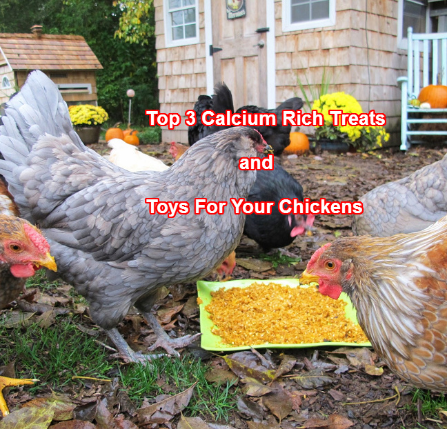 Toys For Chicks : Top calcium rich treats toys for your chickens — types