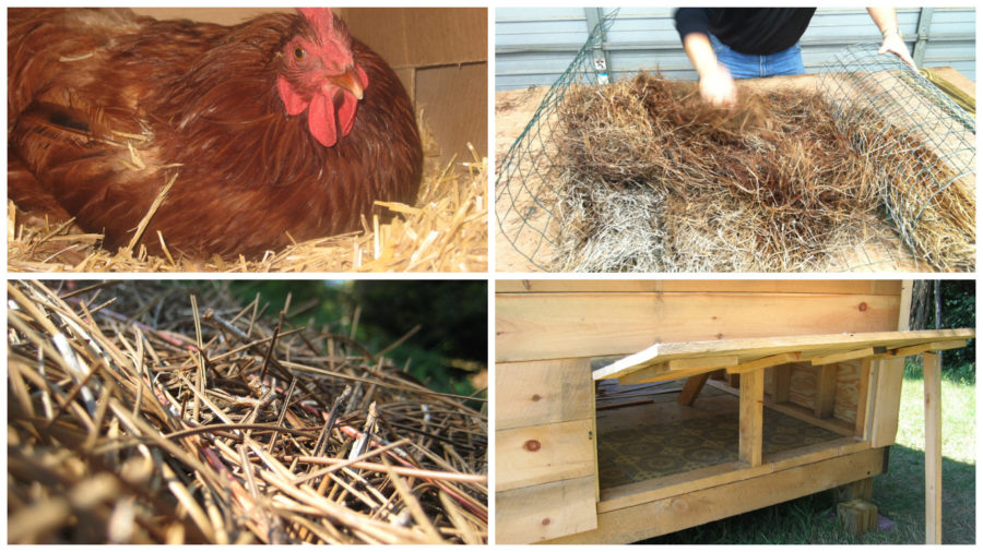 bedding for your chickens