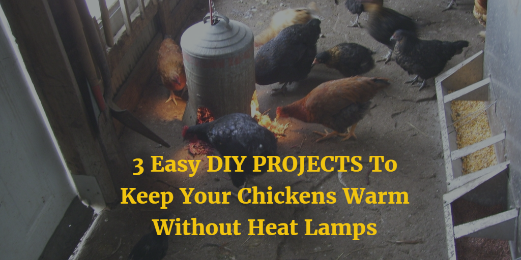 3 Easy Diy Projects To Keep Your Chickens Warm Without