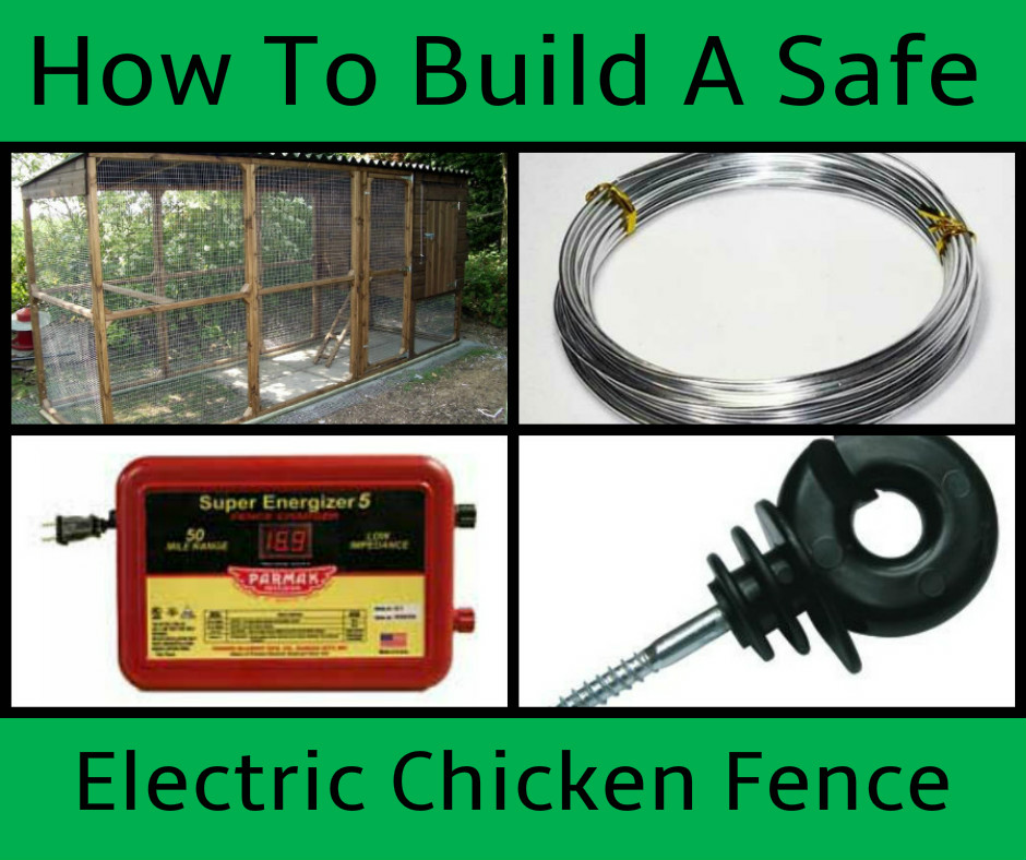 How To Build A Safe Electric Chicken Fence Types Of Chicken