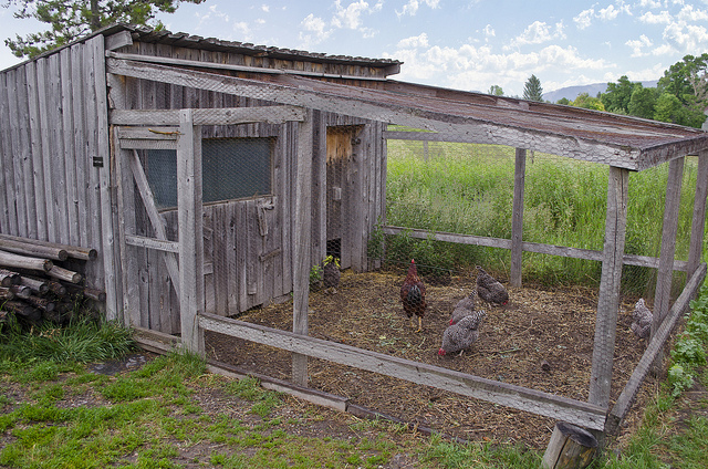 Clean Chicken Coop - Fact About Chickens