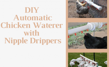 DIY Automatic Chicken Waterer