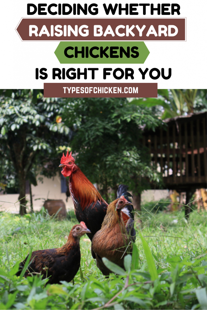 There are a variety of factors that you would have to consider before you would be able to determine whether keeping a flock with you is the right choice.
